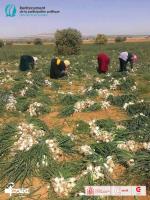 سبر الآراء الخاص بمشروع تشريك المرأة الريفية في إتخاذ القرار